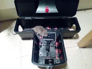 老鼠箱(有老鼠)
