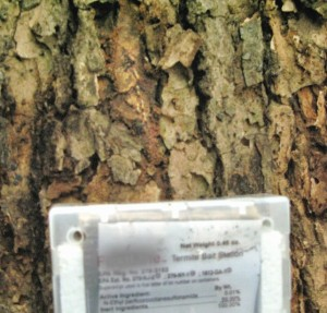 rsz_tree_-¡-ºn-2