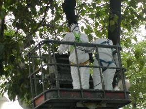 清理樹幹蜂巢-1