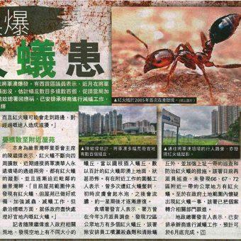20150605_將軍澳紅火蟻