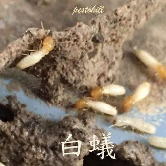 01白蟻2
