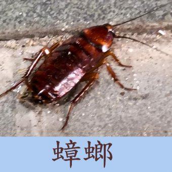 03蟑螂-OK2