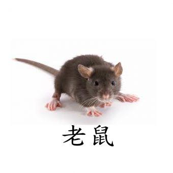 04老鼠-OK