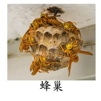 05蜂巢2